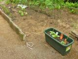 ゴーヤはプランター仕立て、未完成の菜園