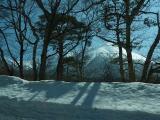 観光道路 木立の中から大山を眺める