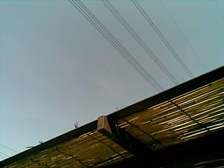 20090305.jpg