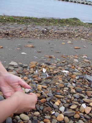 【海辺】あゆの手