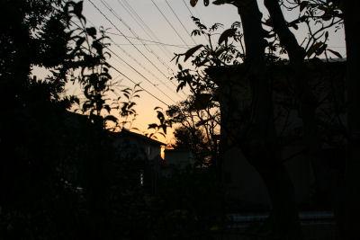 【森めぐさん】夕闇