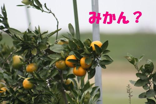 BU-35670001.jpg