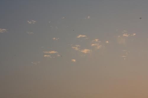 BU-36200001.jpg