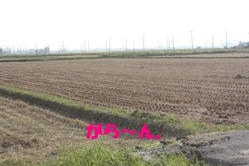 bu-32430001.jpg