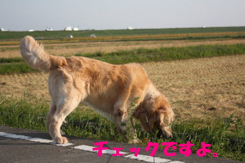 bu-32440001.jpg