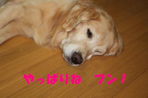 bu-35190001.jpg