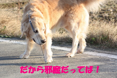 bu-37760001.jpg