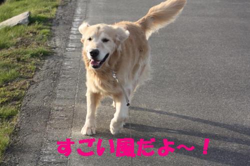 bu-37780001.jpg