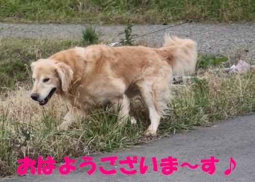 bu-39280001.jpg