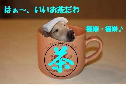 snap_kosugimon_200911621299.jpg