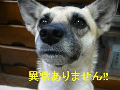 suzu 004