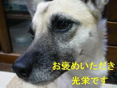 suzu 010