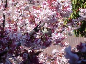 寒い季節に桃色はあったかい気持ちになりますね