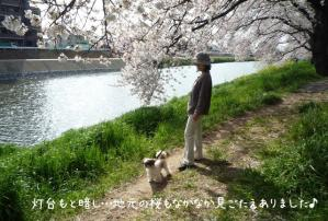 目線に桜…小太郎も楽しめるよ