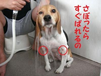 マ 1 ひなっちカイカイ
