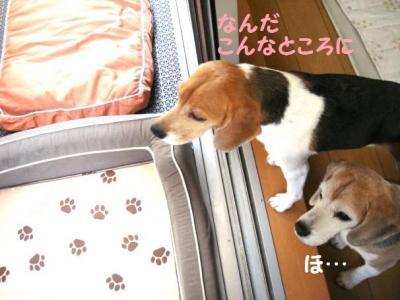 犬部屋 4 あった
