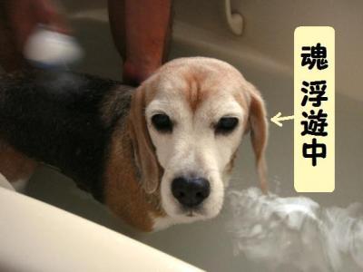 アニマー湯 8 コテツさん入浴中