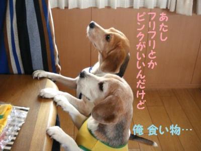 ひぃちゃん 3 お礼