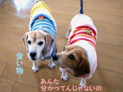 ひぃちゃん 4 ニットジャケット