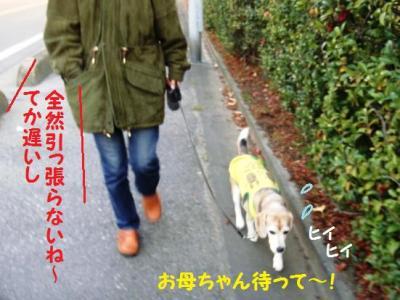 ひぃ散歩 1 ペア