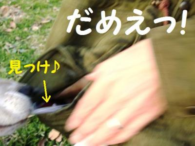ひぃ散歩 13 こら!