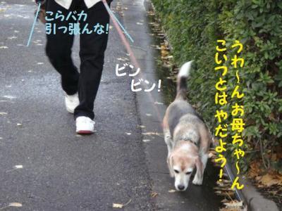 フラグ 6 お散歩