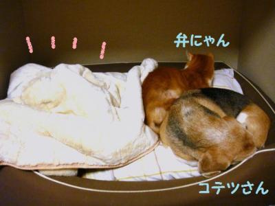 証拠 4 犬部屋