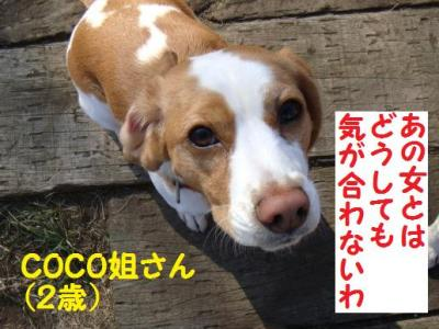 今昔 5 COCOさん