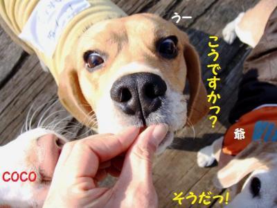 ボツ 8 おやつマスター入門 うーちゃん編