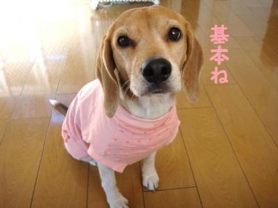 豪華 9 ピンクちゃん1