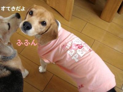 豪華 10 ピンクちゃん2