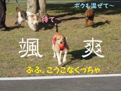 パラダイス 1 小型犬エリア