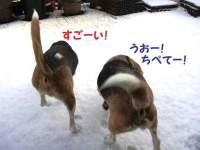 雪 1 ひゃっほー!