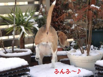 雪 3 さっそく