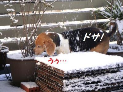 ふわ雪 2 どさ!