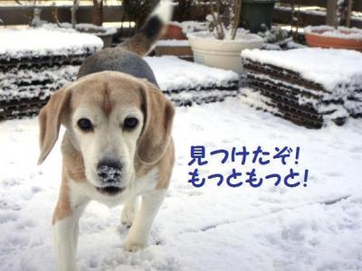 ふわ雪 7 もっともっと!