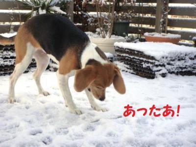 ふわ雪 9 みっけ!
