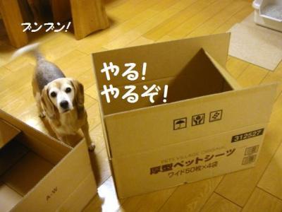 ダンボール 2 がんばる!