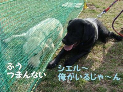 作戦 16 小型犬エリア