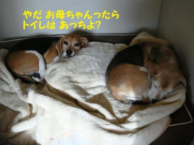 リハビリ 2 犬部屋