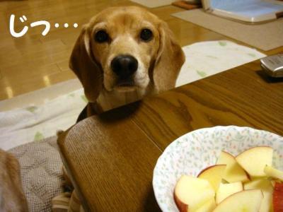 りんご 1 アイコンタクトはバッチリ