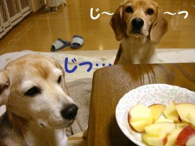 りんご 2 ガン見