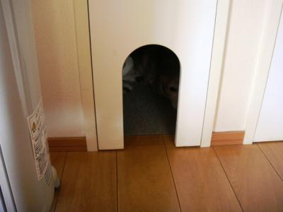 猫部屋 5 おや?