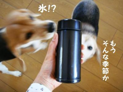 伊藤さん 6 水筒