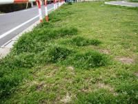 草刈り 3 前 道