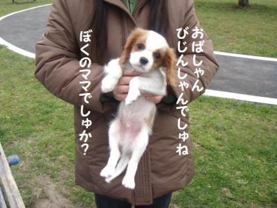 3月ラン 2 アトム(仮)でしゅ