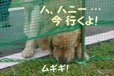 コテツ編 5 小型犬エリアの助さん