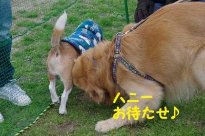 コテツ編 6 本望