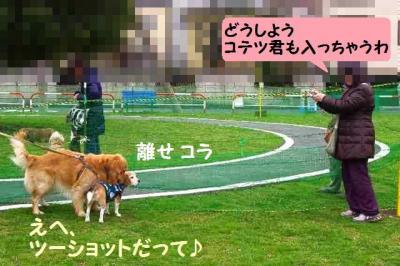 コテツ編 8 広報写真