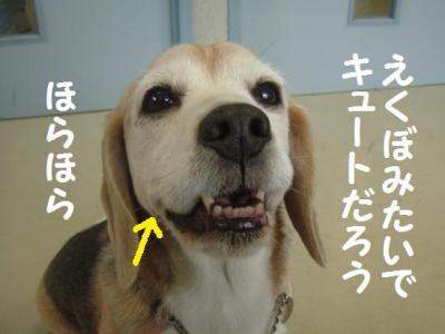 本題 6 えくぼ